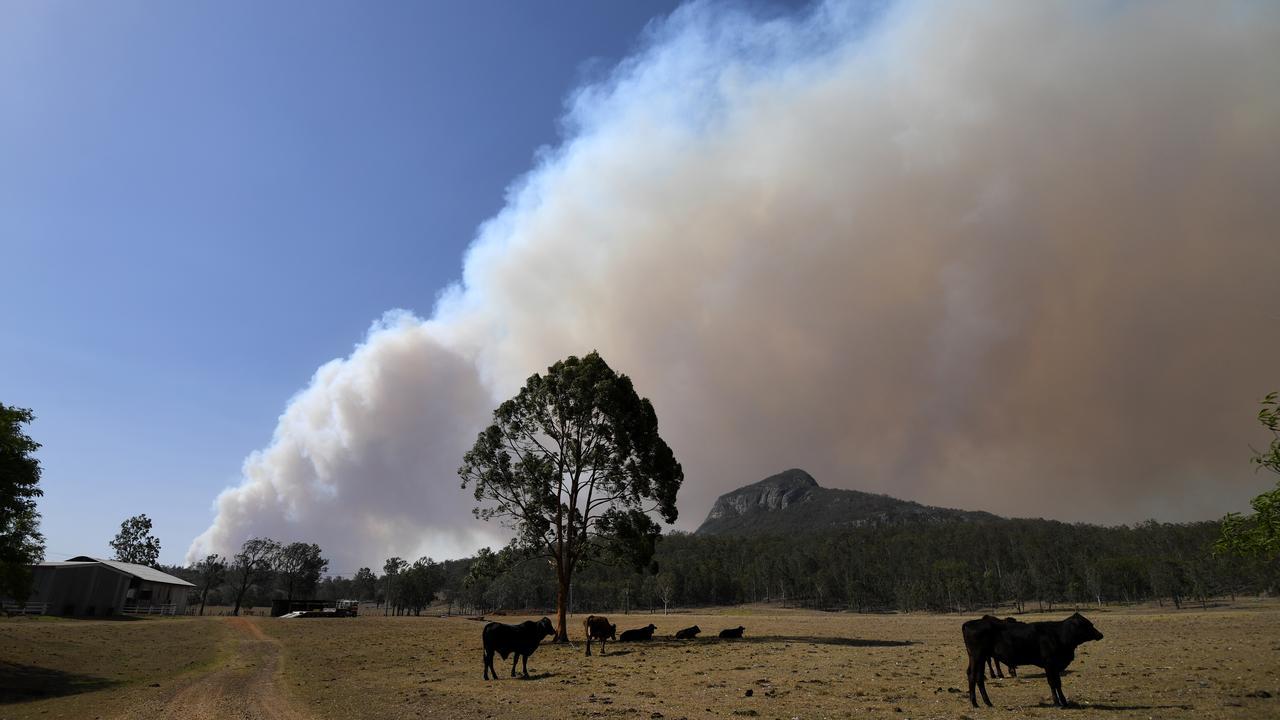 SMOKE HAZE IMMINENT: Smoke from an out-of-control bushfire near Clumber on Friday (Dan Peled).