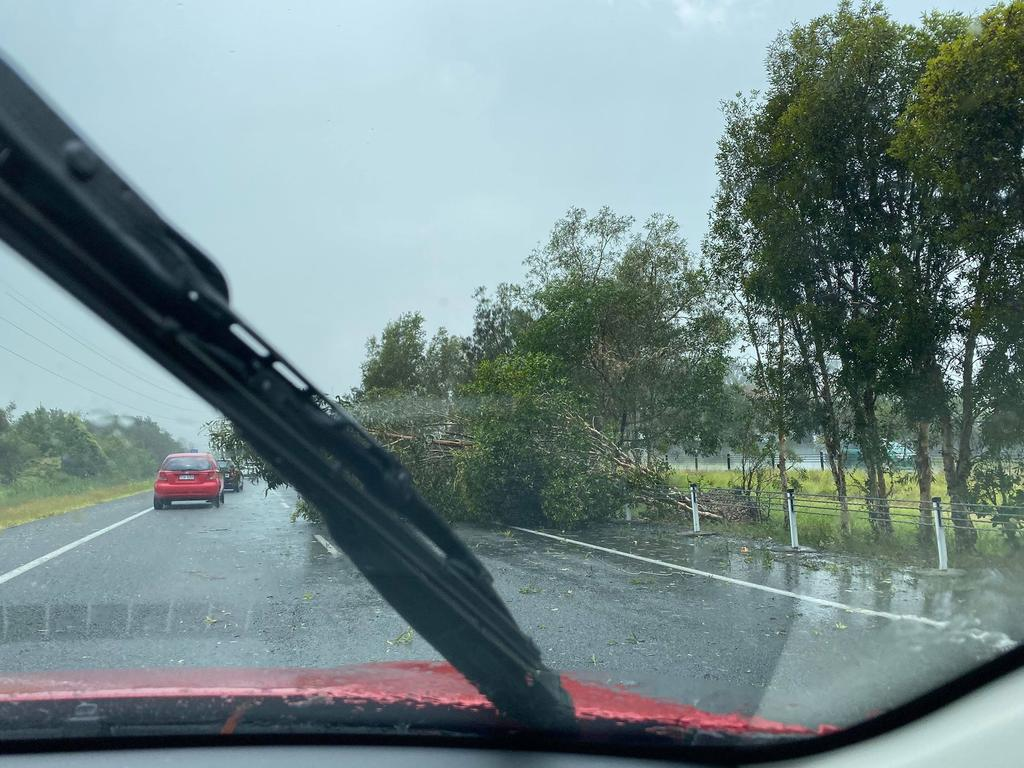 A fallen tree on the Sunshine Motorway at Sippy Downs.