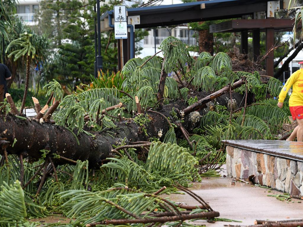 Storm over the Sunshine Coast. A large Norfolk Pine crashed down near the Alex Surf Club.