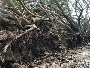Trees uprooted, farm destroyed as 'mini cyclone' hits