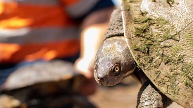 Strangers' water generosity saves turtles from drought