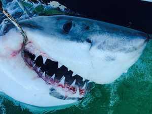 Shark control legislation questions not addressed