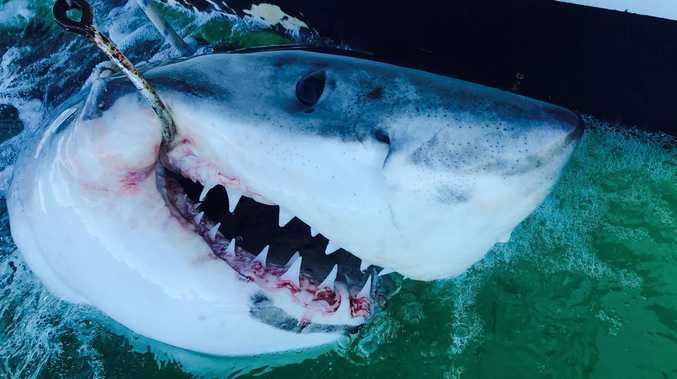 Shark control legislation questions not addressed