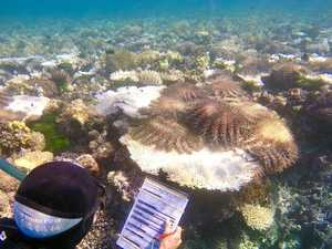 No grief for the Great Barrier Reef