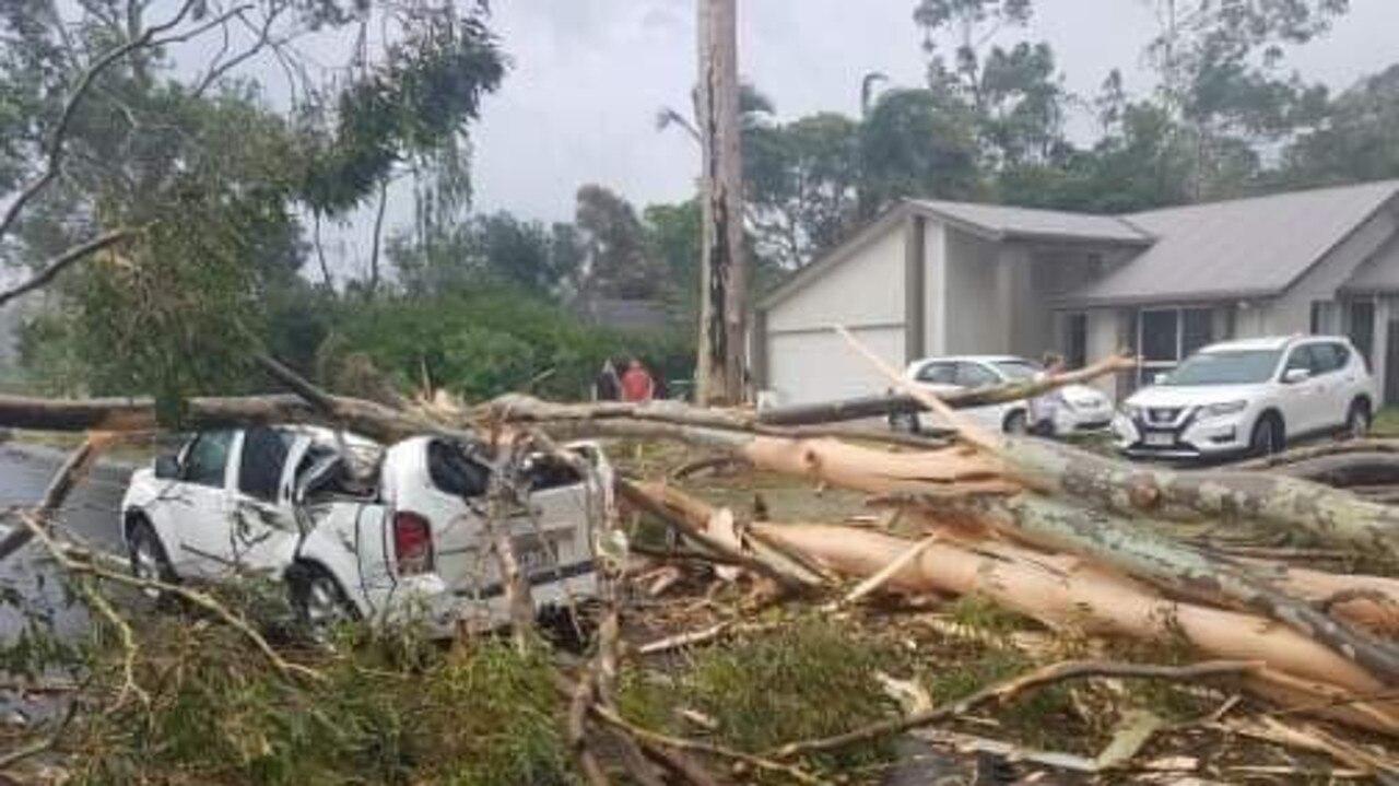 Fallen trees at Buderim.