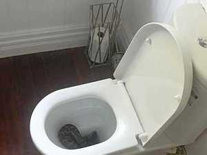 Huge snake in toilet shocks Northern Rivers family