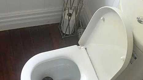 Huge snake in toilet shocks Northern Rivers family