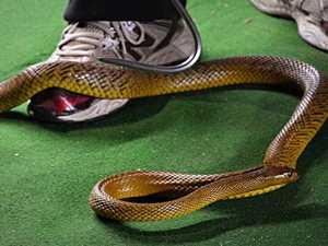 Sarina woman suffers suspected snake bite