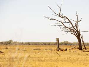 Shocking figures show true cost of drought