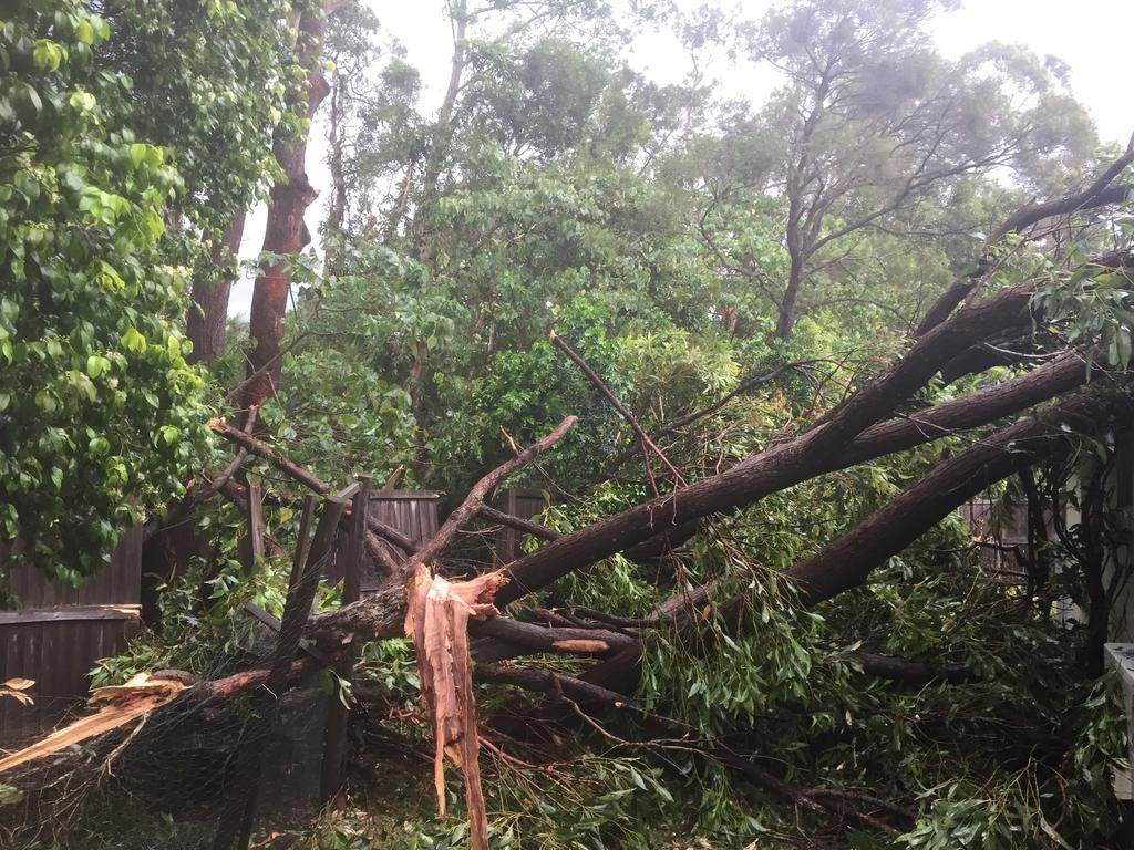 Thick branches of trees were sheared off by mini-tornado like wind gusts hitting and piercing through the roof of the Thompson family's Mooloolaba home