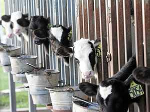 Dairy farmers call for $1.50 per litre milk