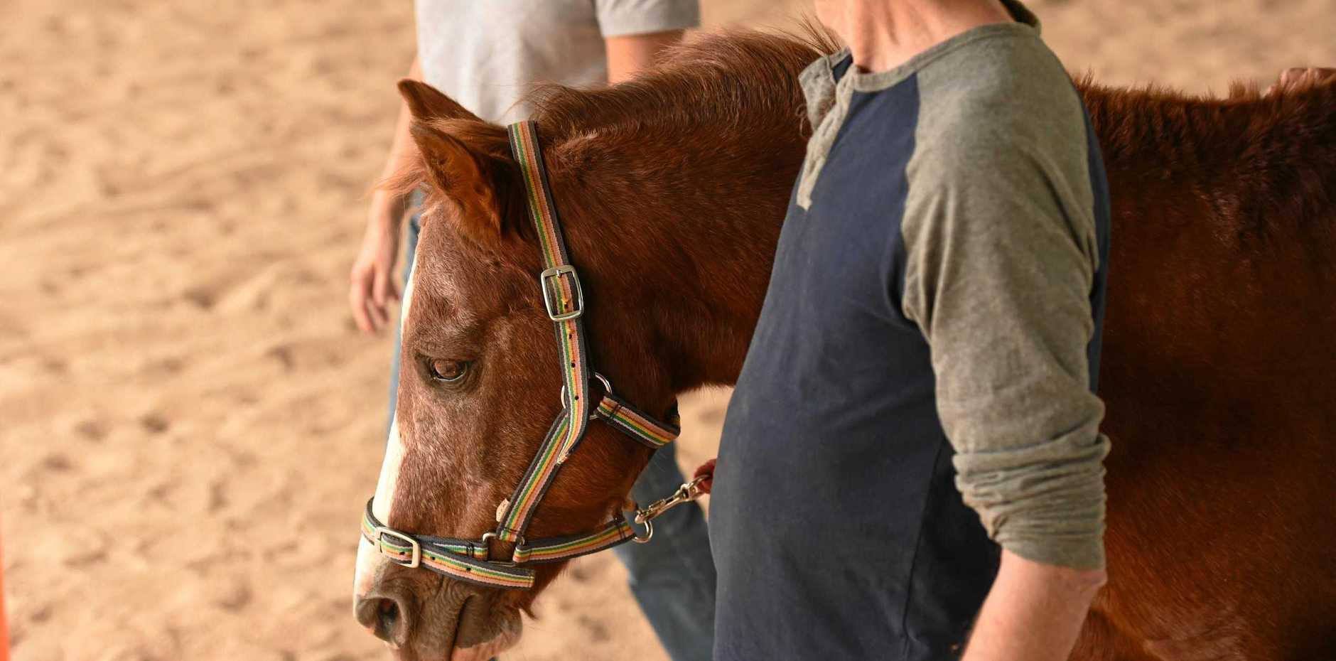 SAFETY: Ballina's Riding for the Disabled is improving the wellbeing of 11 horses they use in their Teven precinct.