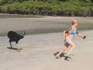 WATCH: Tourist chased by cassowary at Cape Tribulation