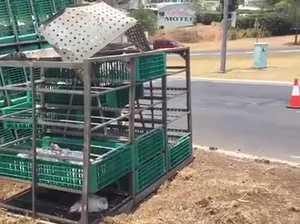 Toowoomba Chicken Truck Crash