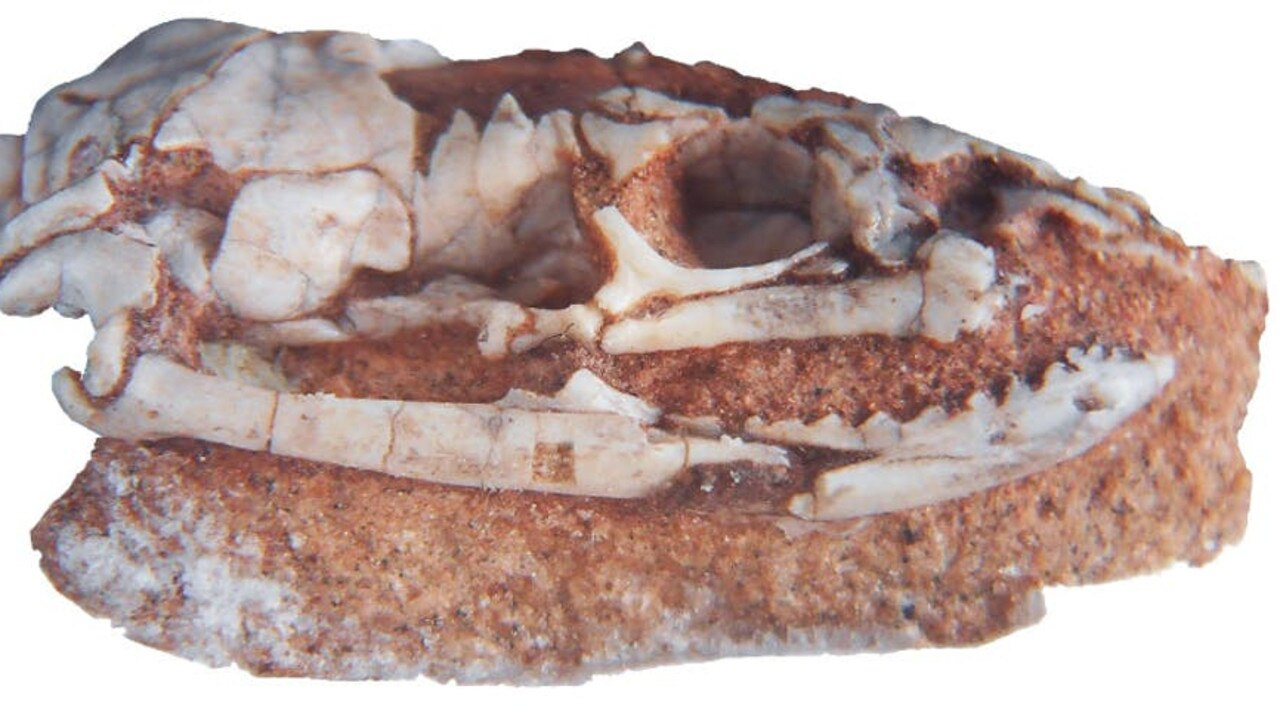 Cheekbone of ancient snake sheds light on snake evolution