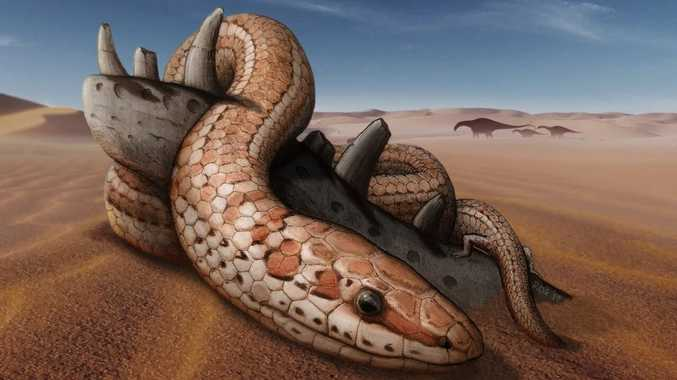 How snakes got their slither