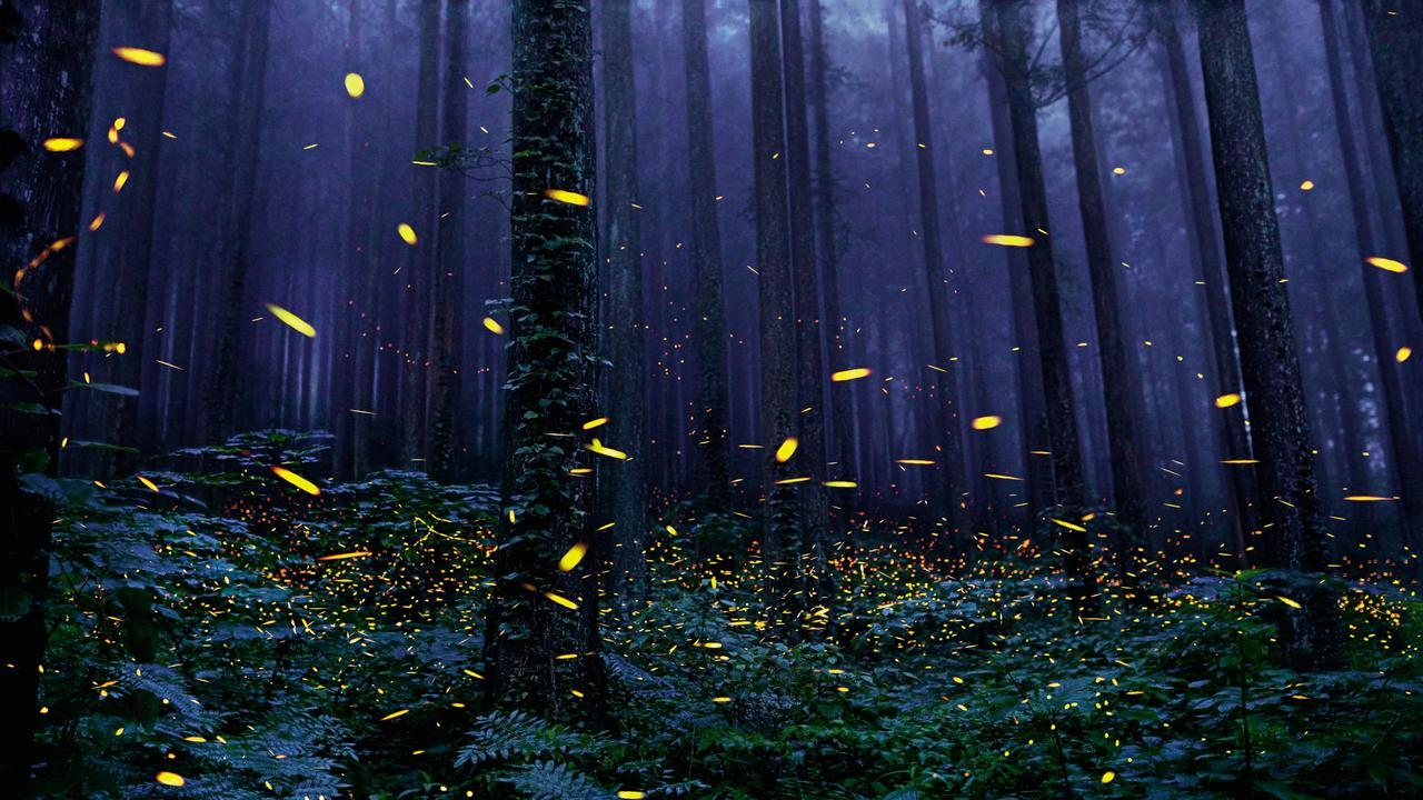 BRIGHT LIGHTS: Catch the fireflies at Queen Mary Falls this weekend.