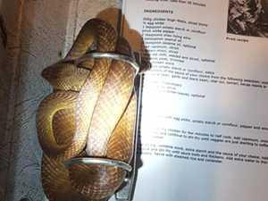 Snake's sneaky hiding spot shocks resident