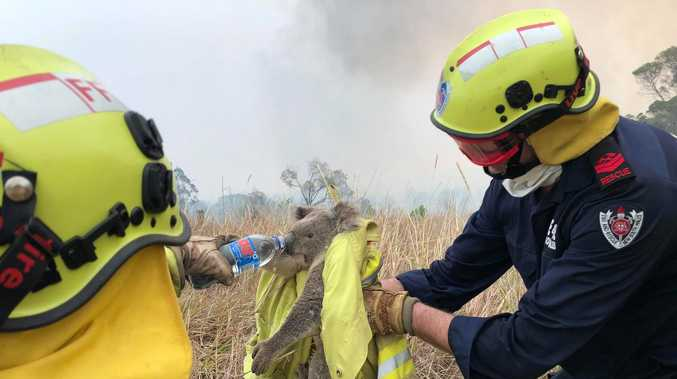HEART WARMING: Our koala-fied fire heroes to the rescue