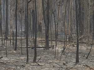 Financial tips to help recover from bushfire damage