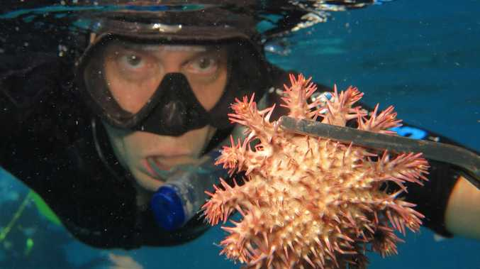 Great Barrier Reef work giving nature a hand