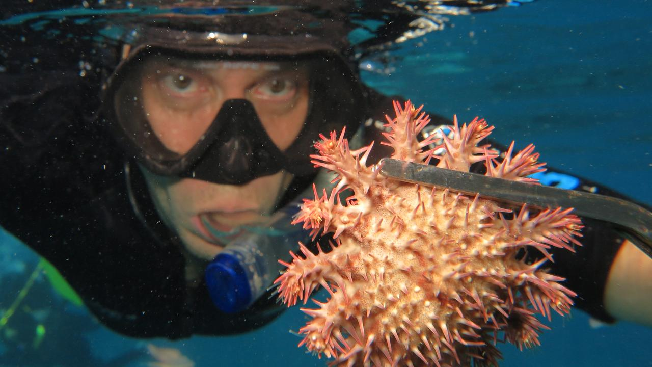 Experimental Scientist with the Australian Institute of Marine Science Jason Doyle with a Crown of Thorns starfish (COTS) on Moore Reef, part of the Great Barrier Reef Marine Park, off the coast of Cairns in Far North Queensland. PICTURE: BRENDAN RADKE