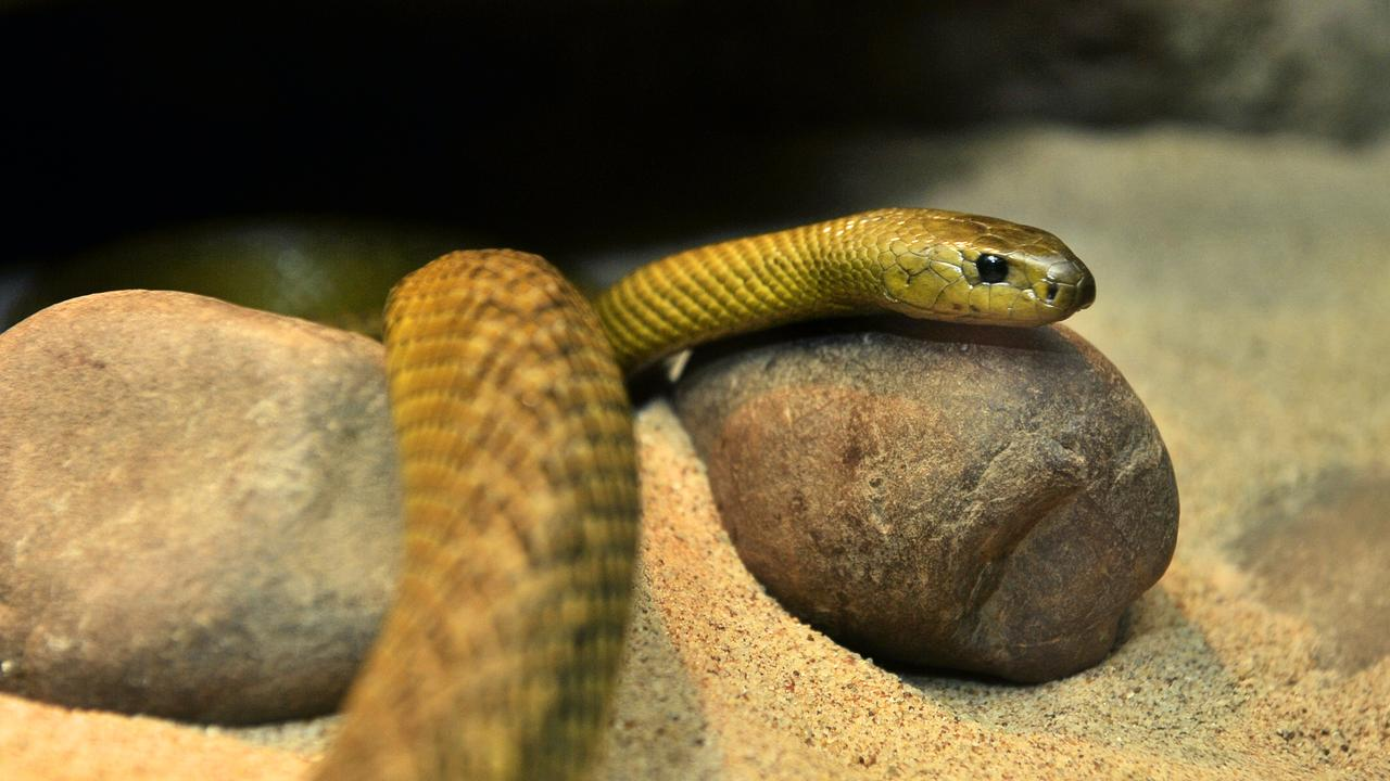 A Quilpie woman was bitten by a unknown type of snake at a home overnight.