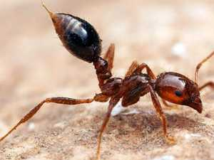 Industry support needed to ensure fire ant eradication
