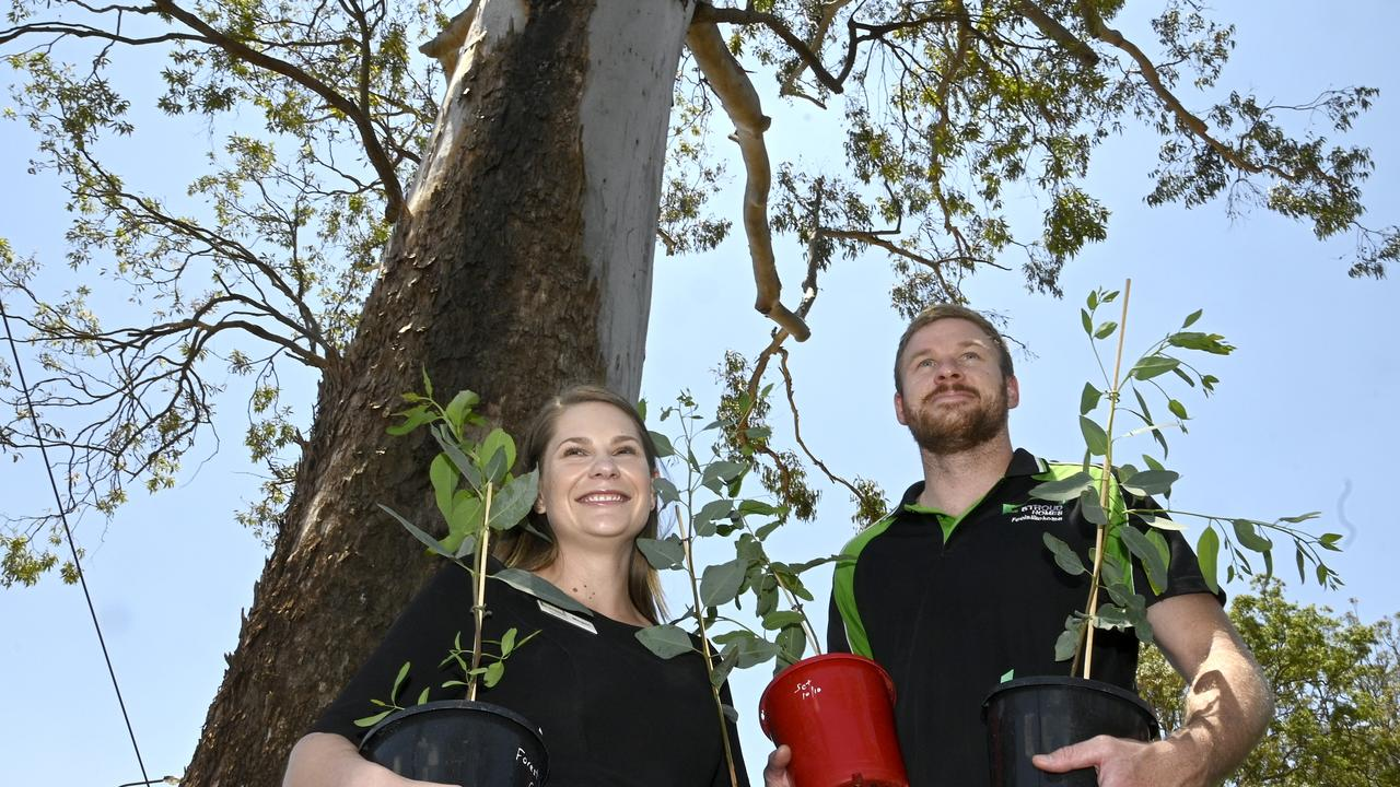 Owners of Stroud Homes Toowoomba, Megan Thomas and Patrick Neville are donating trees to fire ravaged areas surrounding Pechey Forest. Picture: Bev Lacey