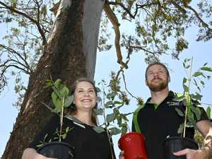 Couple donates 700 trees after bushfire destruction