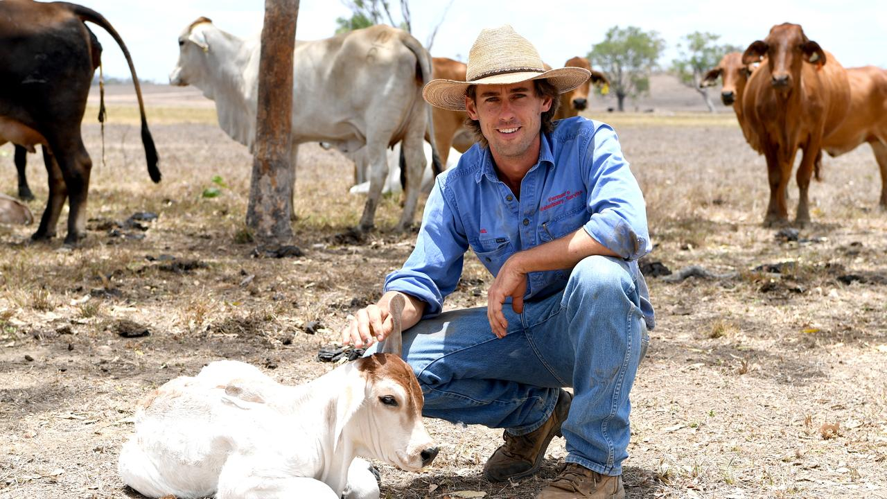 Neil Farmer with an hours-old Brahman calf on his Yaamba property
