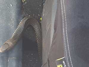Driver finds snake under car seat