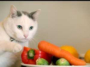 Huge cat fight over felines stealing woman's dinner