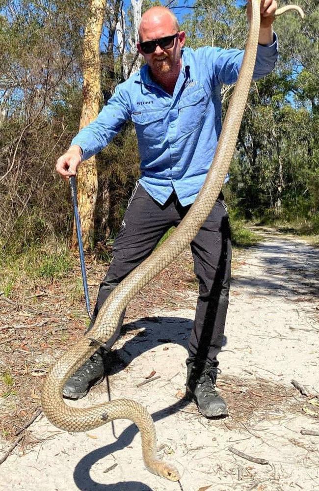 Stuart McKenzie runs a Queensland snake wrangling business.