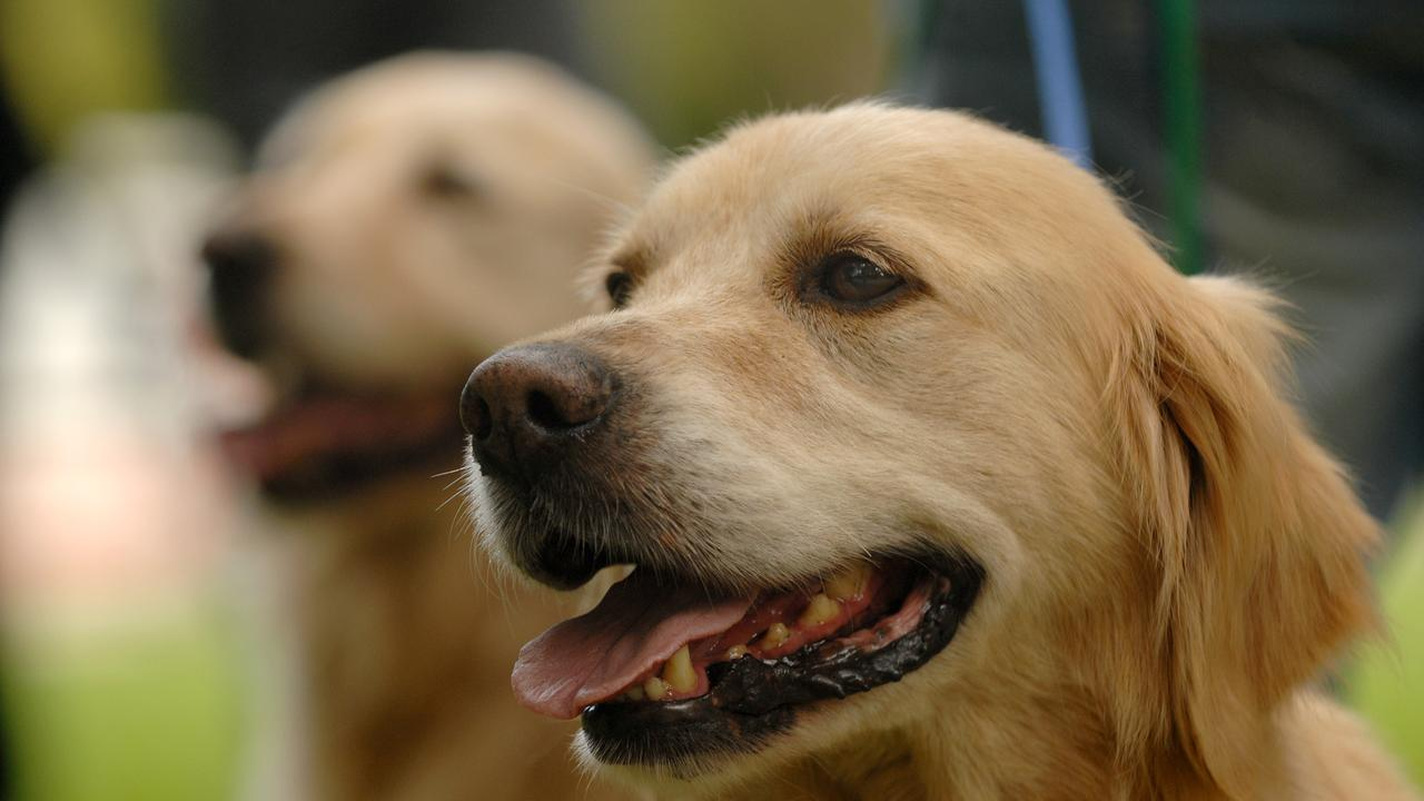 Somerset's Systematic Dog Inspection Program is having its desired impact.