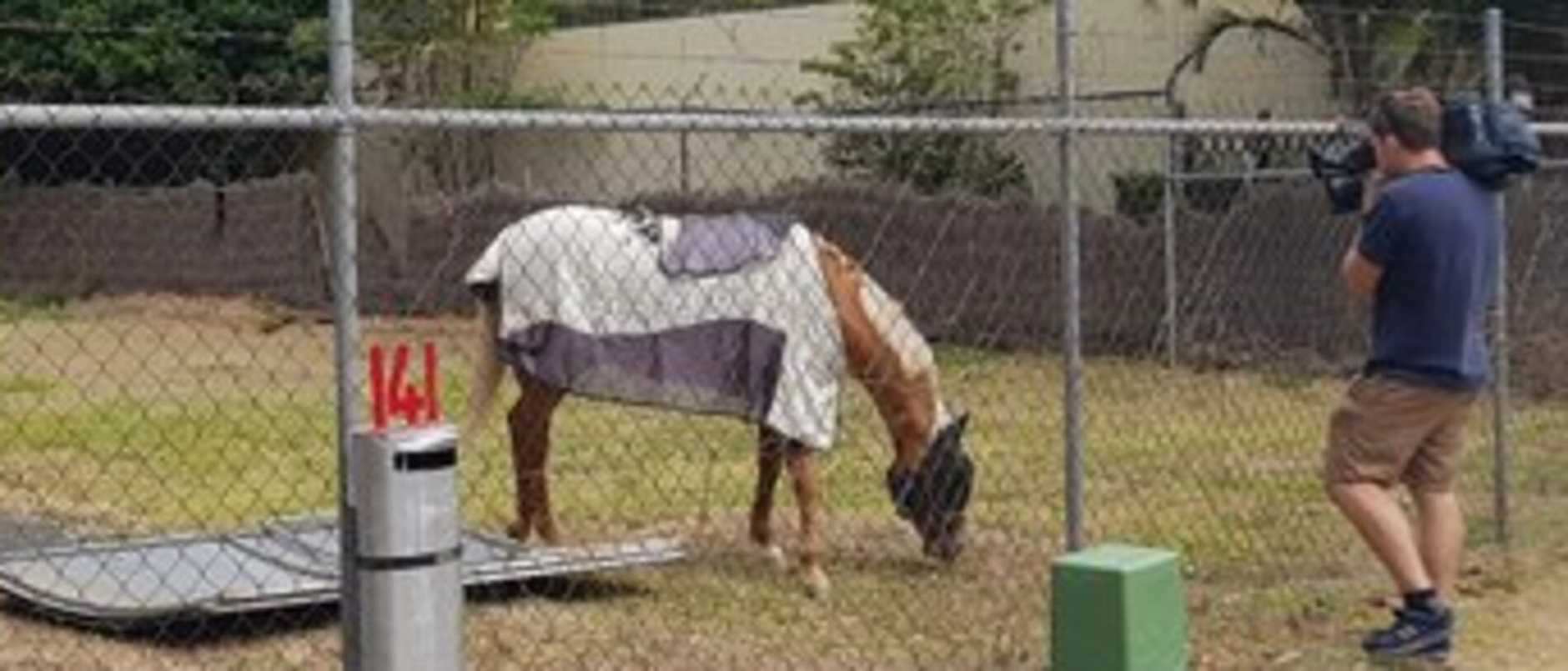 A missing horse has been found beside a major attraction after it was reportedly stolen from a property earlier this morning.