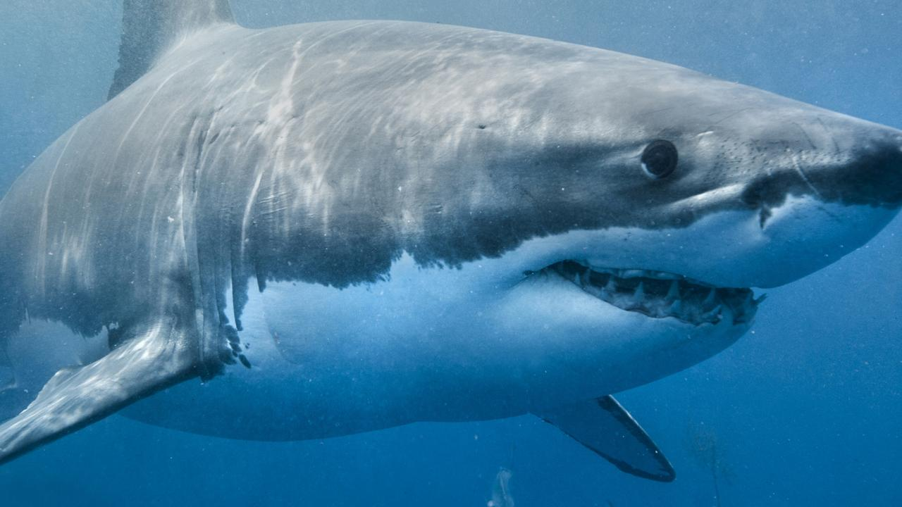 A local Whitsunday fisherman, restaurant owner and tourism provider has suggested a plan to ensure no more shark attacks happen in the Whitsundays.