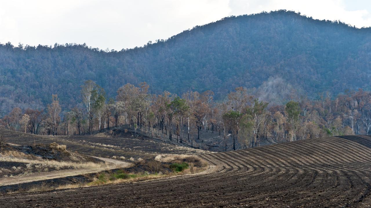 Fire damage to a cane farm in Finch Hatton.