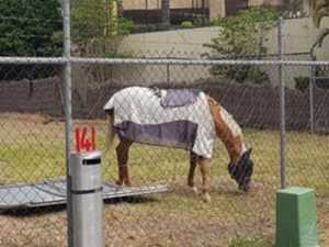 Stolen horse found in unlikely location