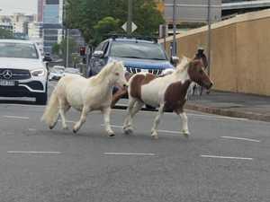 Runaway ponies cause CBD chaos