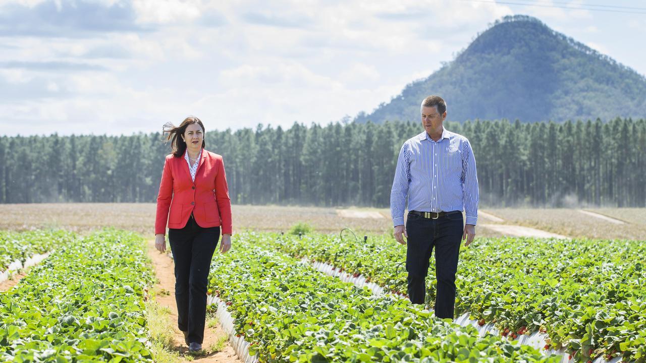 Premier Annastacia Palaszczuk visiting Pinata Farms Strawberry Fields at Wamuran with owner Gavin Scurr. Picture: Lachie Millard