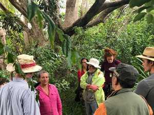 Saving local native trees