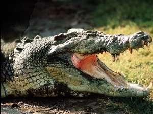 Five crocs removed to reduce risk of attacks