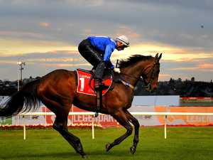 Start of champion mare's streak to be immortalised