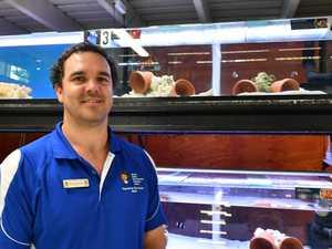 SAVING NEMO: Clownfish program launched
