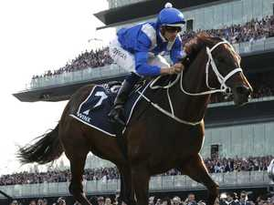 Christmas gift! Champion mare Winx in foal