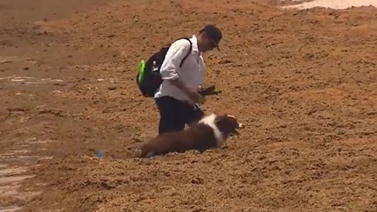 A man and his dog struggled to get through the mass of seaweed. Photo: 9 News