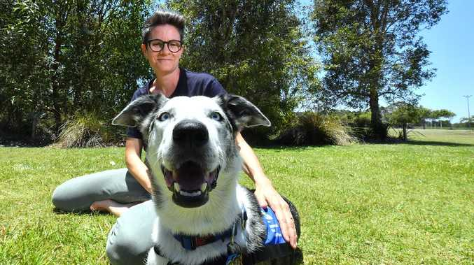 Hollywood stars give pat on the back to heroic pup