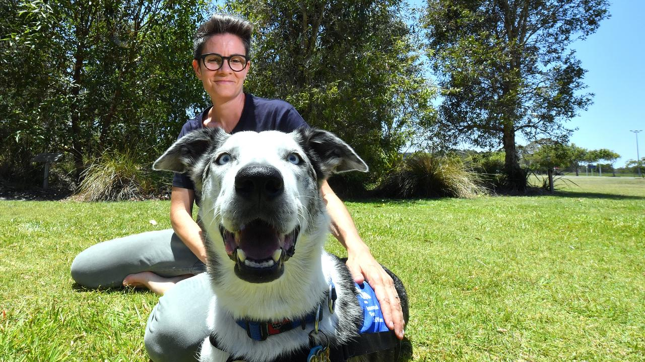 USC's detection dog Bear has been trained to seek out koala's in need of rescue after bushfires. Pictured with Associate Professor Celine Frere. Photo: John McCutcheon / Sunshine Coast Daily