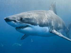 Search resumes for shark attack victim